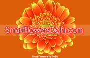 SmartFlowersDelhi.Com announces gift ideas for all season events in De
