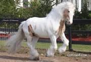 white horse for free adoption